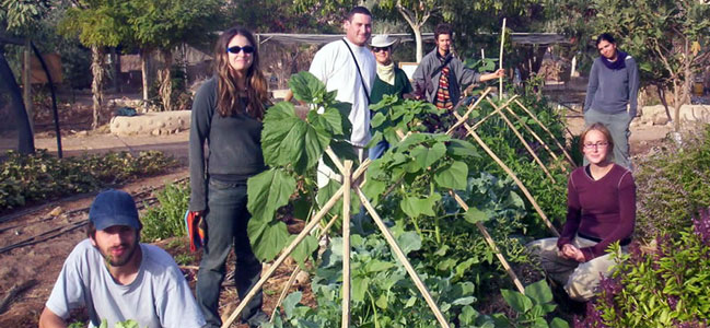Lotan participants in Israel Environmental Studies Program tending to their sustainable garden