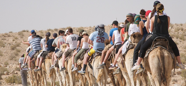 Kibbutz Ulpan students on a trip to a Bedouin village by way of camels