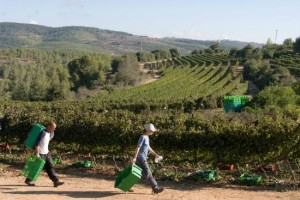 winery-at-kibbutz-tzuba[1]